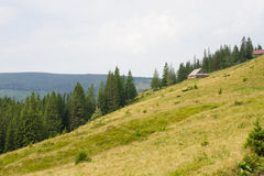 Spruce forest in the Ukrainian Carpathians. Sustainable clear ecosystem. Mountain valley stock photos