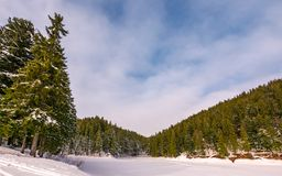 Spruce forest in winter Stock Photos