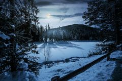 Spruce forest on winter night in full moon light. Lovely nature scenery in mountains Stock Photography