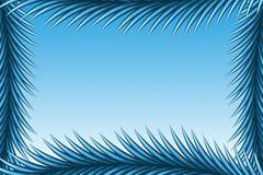 Spruce Frame. Vector illustration of Spruce Frame Royalty Free Stock Image