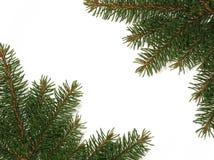 Spruce frame Stock Photography