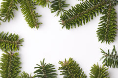 Spruce frame Stock Photography
