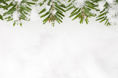 Spruce frame on snow background Stock Photo