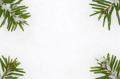 Spruce frame on snow background Royalty Free Stock Images