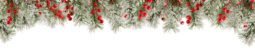 Spruce green Christmas branches with snow, red berries and cones as frame or border for winter design isolated on white background