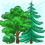 Spruce and green tree. Park. Corporate identity is drawn by hand. Illustration Stock Photography