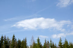 Spruce horizon background. Background of spruce horizon and white clouds Royalty Free Stock Image