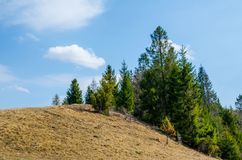 Spruce i bergen Arkivbild