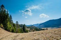 Spruce i bergen Arkivfoton