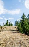 Spruce i bergen Royaltyfri Bild