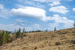 Spruce i bergen Arkivfoto