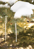 Spruce icicle Stock Photography