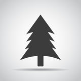 Spruce icon with shadow on a gray background. Vector illustration Stock Photography