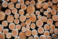 Spruce logs Royalty Free Stock Image