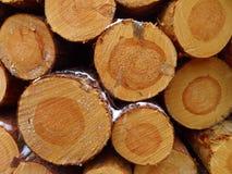 Spruce logs Stock Photography