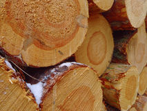 Spruce logs Royalty Free Stock Images