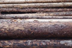 Spruce logs background Royalty Free Stock Images