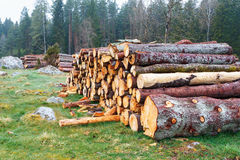 Spruce logs Stock Photography