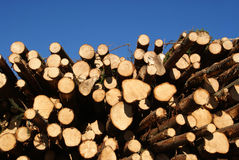 Spruce Logs Stacked with Blue Sky Background stock images
