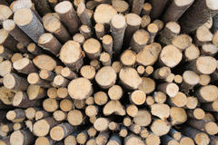 Spruce logs wood Royalty Free Stock Photography