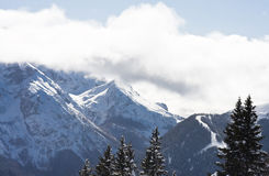 Spruce and mountain Royalty Free Stock Photos