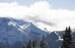 Spruce and mountain. Ski resort madonna di campiglio Royalty Free Stock Photos
