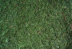 Spruce needles Stock Image