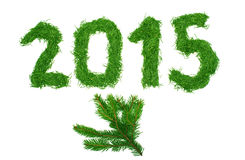 2015 of spruce needles Stock Photography