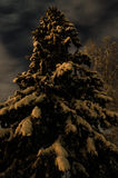 Spruce at night. Dramatic sky over high tree at night Stock Photography