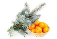 spruce nya mandarines för filial Royaltyfria Bilder