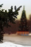 Spruce paw Christmas tree. Stock Photography