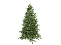 Spruce_(Picea) Stock Images