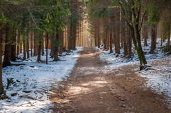 Spruce pine forest path way, winter snow covered landscape Stock Photography