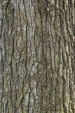 Spruce Pine Tree Wood Skin Texture Stock Photos