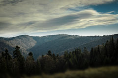 Spruce, pine trees and hills landscape in Poland. Stock Image