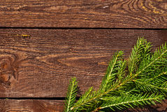 Spruce on planks Stock Photography