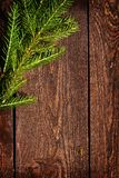 Spruce on planks Stock Images