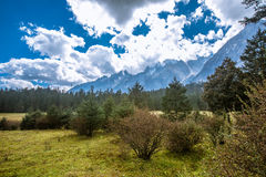 Spruce Plateau. Alpine forest at an altitude of over 2,000 meters Royalty Free Stock Images