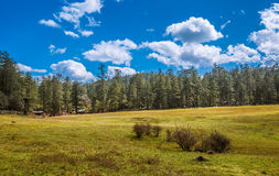 Spruce Plateau. Alpine forest at an altitude of over 2,000 meters Stock Photos