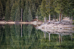 Spruce Reflections Royalty Free Stock Photography