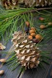 Spruce resinous cedar-tree cone with cedar nuts, needles and ced. Ar branches on dark wooden background Stock Photos