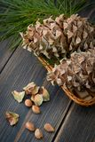 Spruce resinous pine-cones in wicker basket with pine nuts and p. Ine needle branch on dark wooden background Royalty Free Stock Photo