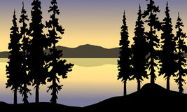 Spruce in riverbank scenery Royalty Free Stock Photo