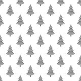 Spruce seamless pattern. On white background. Tree design vector illustration Royalty Free Stock Photo