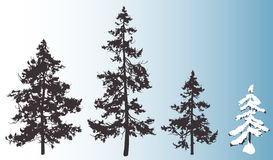 Spruce. Silhouettes fluffy fir trees for your design, isolated objects Royalty Free Stock Photos