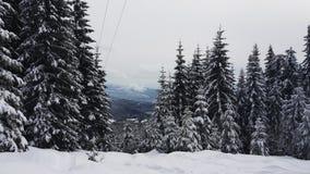 Spruce skog i vinter royaltyfri fotografi