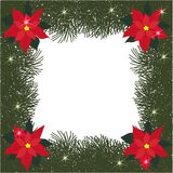 Spruce square frame with flowers of poinsettia and glitter Royalty Free Stock Image