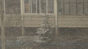 Spruce stands in the courtyard in the heavy snowfall stock footage