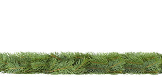 Spruce strip. Stock Images