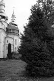 Spruce on the territory of the monastery royalty free stock photo